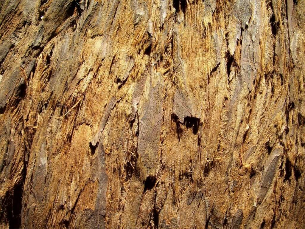 tree bark from a brown tree