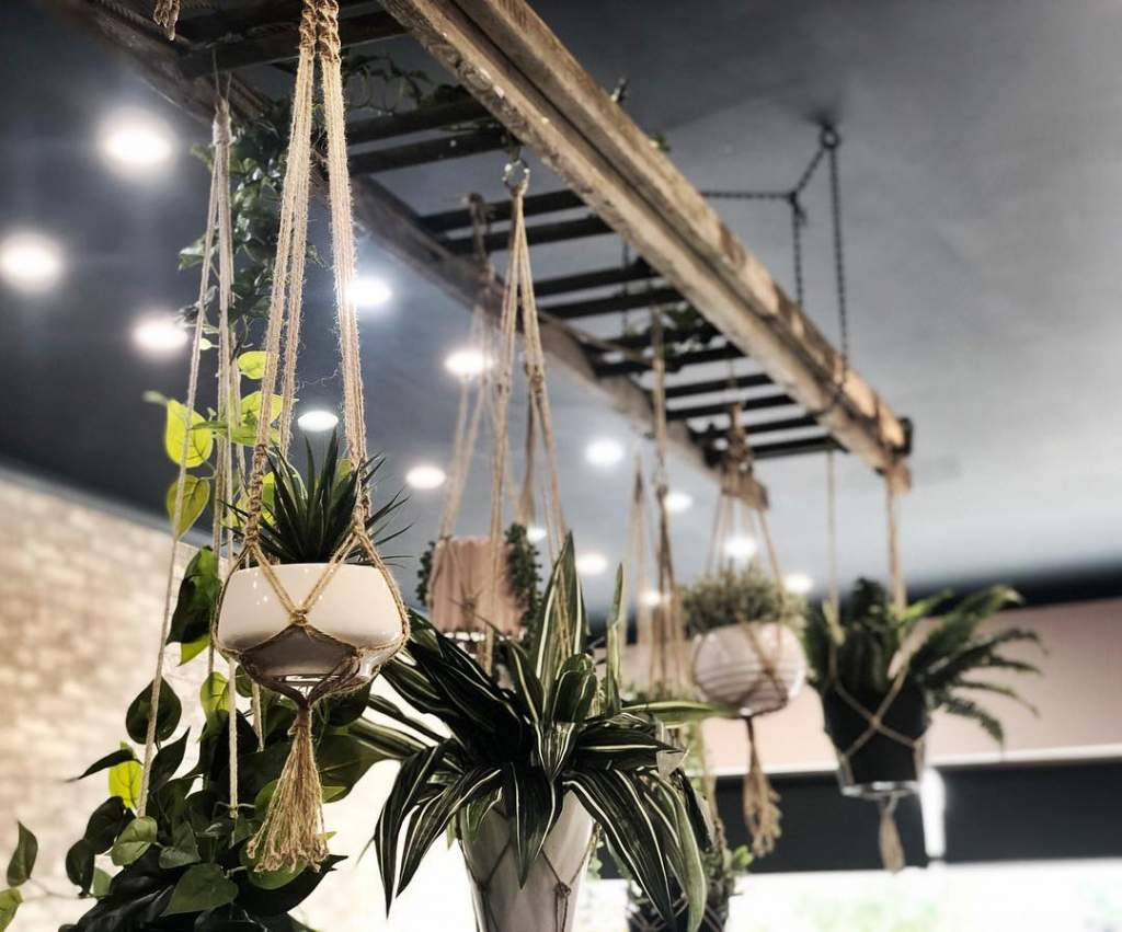 hanging plants in a hair salon